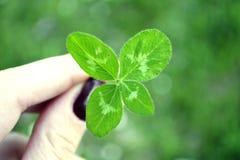 Trevo de quatro folhas para a boa sorte foto de stock