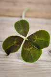 Trevo de quatro folhas para a boa sorte fotografia de stock