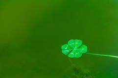 Trevo de quatro folhas sobre a água foto de stock