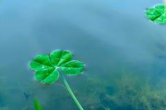 Trevo de quatro folhas sobre a água 2 foto de stock royalty free