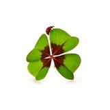 Trevo e joaninha de quatro folhas isolados no fundo branco Fotos de Stock Royalty Free
