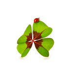 Trevo e joaninha de quatro folhas no fundo branco Fotografia de Stock Royalty Free