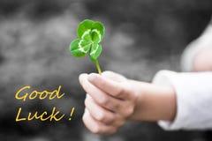 Trevo Quatro-com folhas em uma mão da criança - boa sorte Fotos de Stock