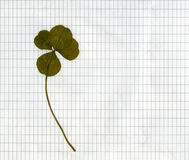 Trevo quatro-com folhas pressionado Foto de Stock Royalty Free
