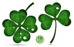 Trevo verde com gotas da água Imagens de Stock Royalty Free