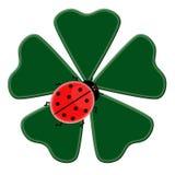 Trevo verde feliz com as cinco folhas com ladybug o Foto de Stock Royalty Free