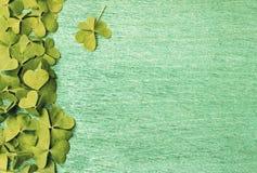 Trevos verdes dos trevos no fundo de madeira Imagens de Stock Royalty Free