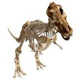TRex Bones - 02. The skeleton of a Tyrannosaurus Rex from different views Stock Illustration
