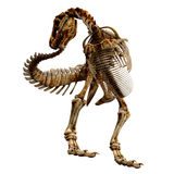 TRex Bones - 06. The skeleton of a Tyrannosaurus Rex from different views. This time he chases his tail and catches it Stock Photo