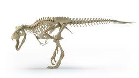 Trex on white. T-rex skeleton on white Stock Images