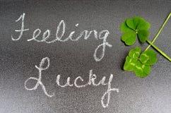 Trèfle de signe chanceux se sentant de concept, de 5 cinq feuilles et de 4 feuilles Image libre de droits