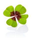 Trèfle à quatre feuilles Images stock