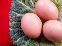 Trhee eggs on cabbage leaf royalty free stock photo