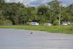 Trähus på styltor längs Amazonet River och regnskogen, Arkivbild