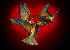 Triángulo de amor contra la perspectiva del corazón rojo Fotografía de archivo libre de regalías