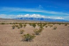 Triángulo de arbustos Fotografía de archivo libre de regalías