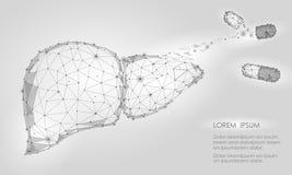Triángulo humano del órgano interno del hígado del decaimiento de la regeneración del tratamiento bajo polivinílico Medicina gris ilustración del vector