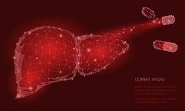 Triângulo humano do órgão interno do fígado da deterioração da regeneração do tratamento baixo poli Medicina conectada c do model Imagem de Stock Royalty Free