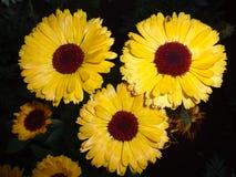 Tri-bloem Royalty-vrije Stock Afbeeldingen