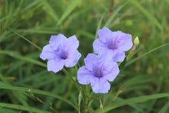 Tri blommor arkivbild