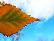 Tri-color leaf Stock Images