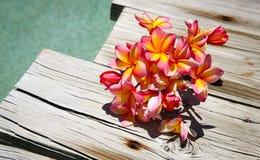 Tri Frangipanis del color por una piscina Foto de archivo libre de regalías
