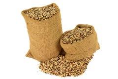 Tri Quinoa da cor Imagem de Stock