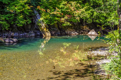 Triad River. A river in Ohanapecosh in the Mt. Rainier National Park, WA Stock Photography