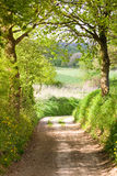 Trial path through forest. Into farmland royalty free stock image