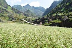 Triangelblomma på det Ha Giang landskapet Fotografering för Bildbyråer