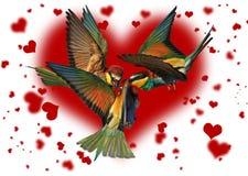 Triangle amoureux des oiseaux combattant sur le fond des coeurs Images stock
