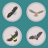 Triangle aves fly animals Stock Images