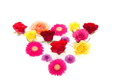 A triangle of colorful flowers Stock Images
