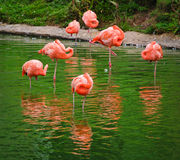 A triangle of flamingos Stock Photo