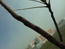 Triangle par un arbre Photo stock