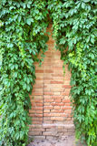 Triangle Pattern On Wall Covered By Ivy Stock Photo