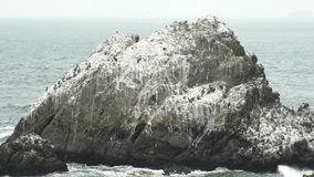 The triangle shape Seal Rocks stock video footage