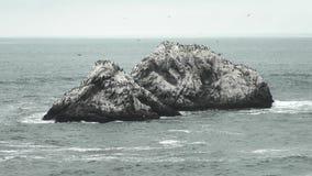 The triangle shape Seal Rocks stock footage
