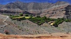 Triangoli verdi delle risaie sul terrazzo sul pendio di un'alta montagna, Himalaya, India del Nord Immagine Stock Libera da Diritti