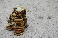 Triangular decorative pyramid made of clam mollusc seashells on concrete molo Royalty Free Stock Image
