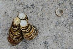Triangular decorative pyramid made of clam mollusc seashells on concrete molo Stock Photos