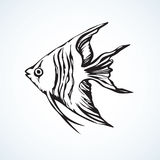 Triangular fish. Vector drawing Stock Images