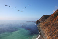 Triangular flock of gray pelicans Stock Photos