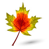 Triangular maple leaf Royalty Free Stock Images