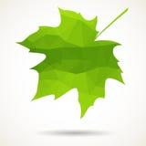 Triangular maple leaf Royalty Free Stock Photos