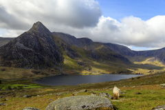 The triangular peak of Tryfan Royalty Free Stock Photo