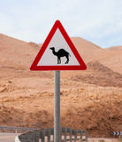 Triangular road sign with camels. Triangular road sign with warning for crossing camels Stock Image