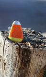 Triangular rock painted to look like candy corn Stock Image