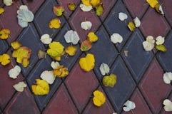 Triangular stone pavement texture background with autumn leaves. Beautifull triangular stone pavement texture background with many autumn leaves Royalty Free Stock Photos