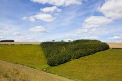 Triangular woodland copse Stock Photography